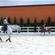Букский каньон+конный завод19.05
